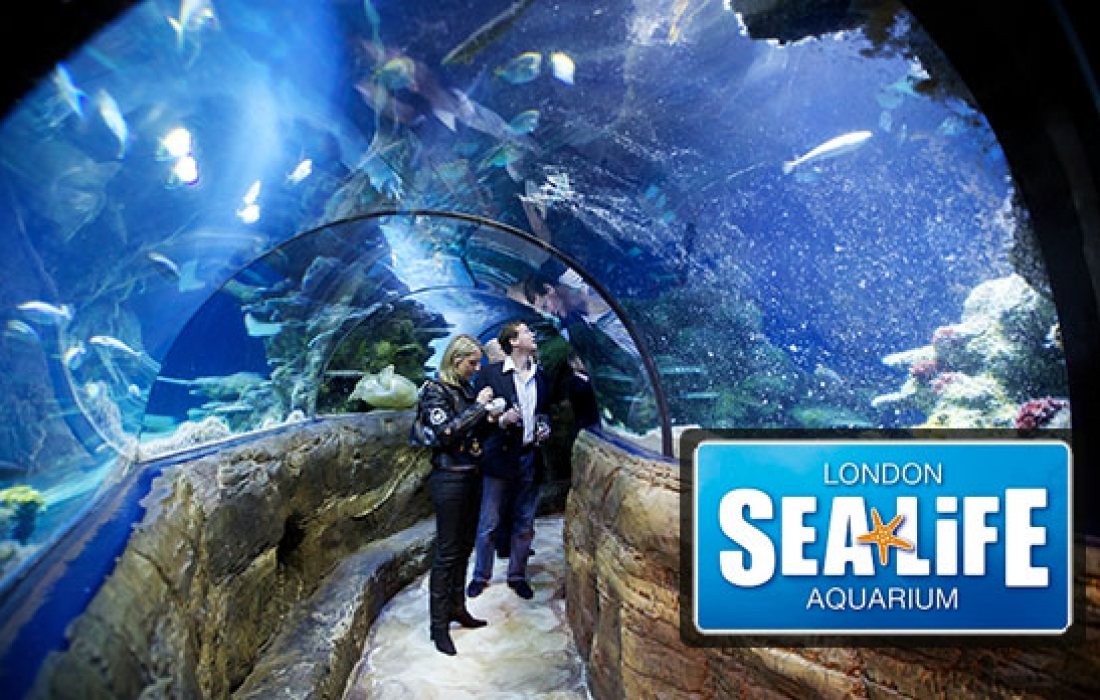 Amazing Christmas Parties At Sea Life London Aquarium